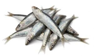 sardinas_xl